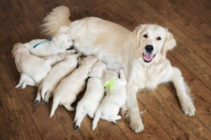 Nursing Puppies