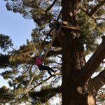 Abseil Tree