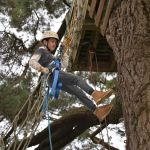 Have a go on the Abseil Tree