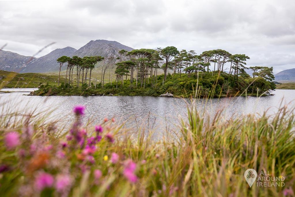 Pine Island, Derryclare Lough