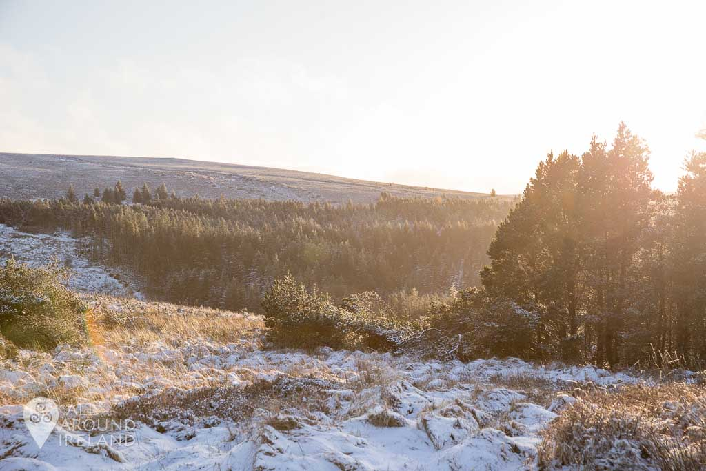 Golden light over the trees, Slieve Bloom Moutains