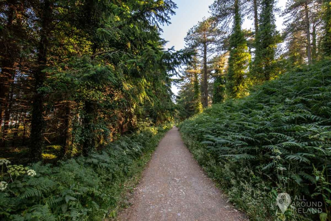 The forest trail, Raven Wood, Curracloe.