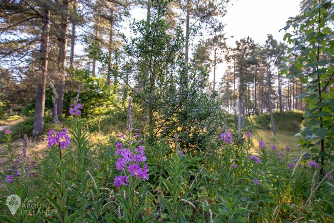 Purple flowers in Raven Wood, Curracloe