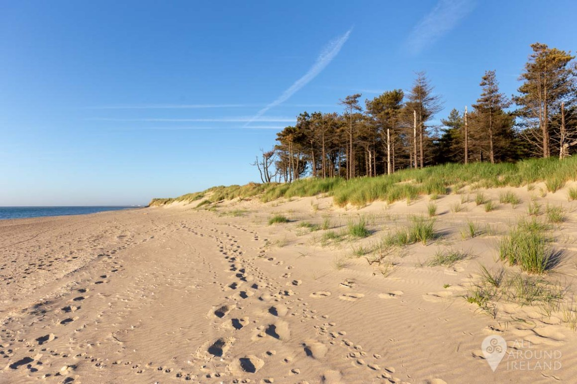 Where beach and forest meet.