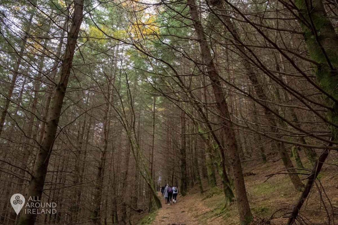 Hiking through the trees in Glendalough