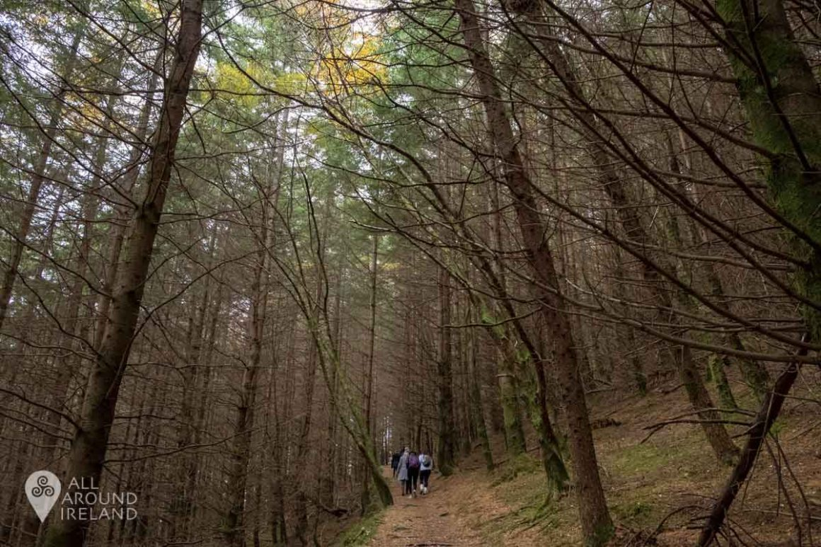 Hiking through the trees in Glendalough