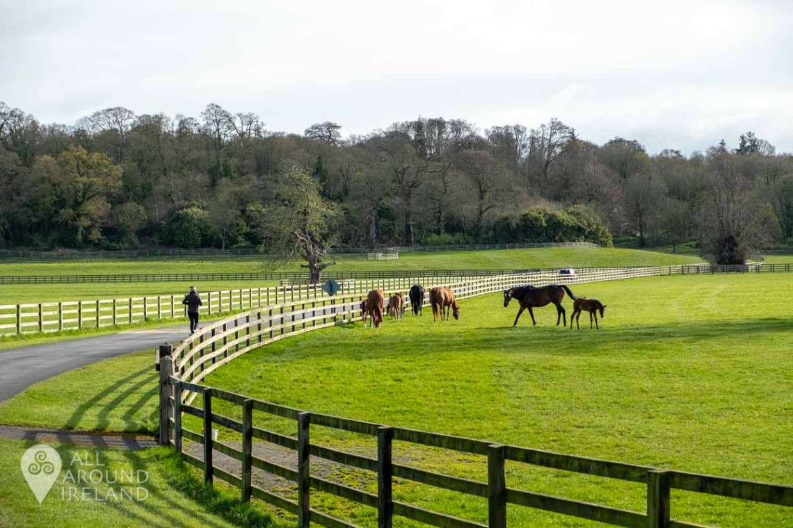 A woman walks past horses and foals in the paddocks near Ballylinch Stud