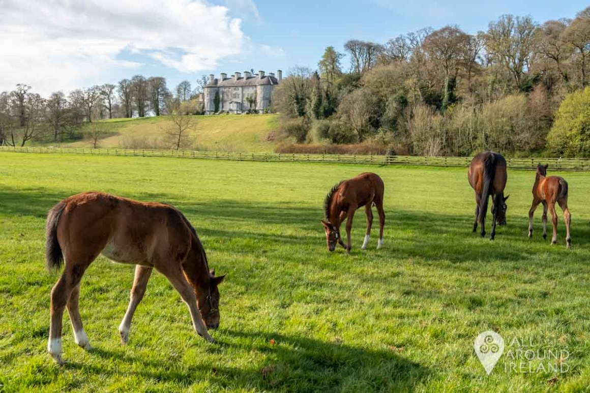 Foals in the paddocks at Ballylinch Stud with the Manor House in the background.