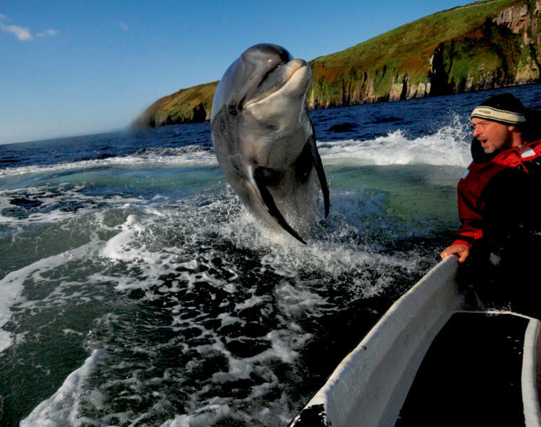 Meeting Fungie the dolphin in Dingle - unique things to do in Ireland