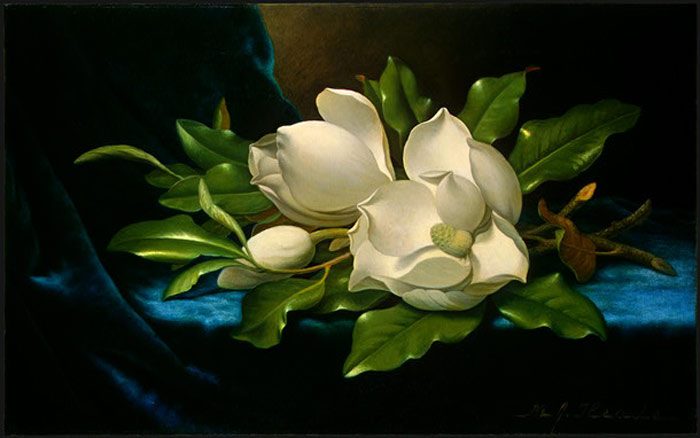 Paintings Reproductions Heade, Martin Johnson Giant Magnolias on a Blue Velvet Cloth, c.1890
