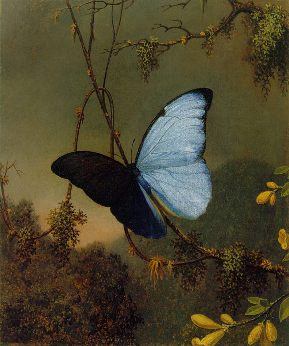 Paintings Reproductions Heade, Martin Johnson Blue Morpho Butterfly, c.1864-1865