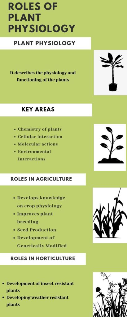 Role of Plant Physiology