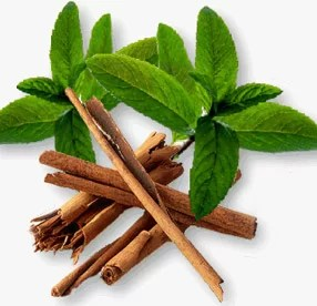 Bilderesultat for cinnamon bark