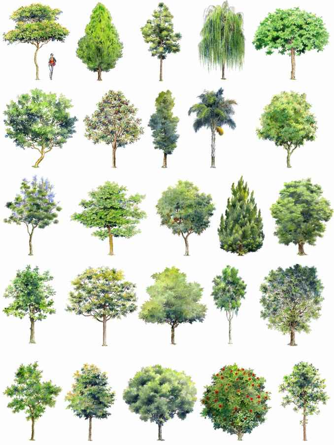 Tree vectors and photos - free graphic resources