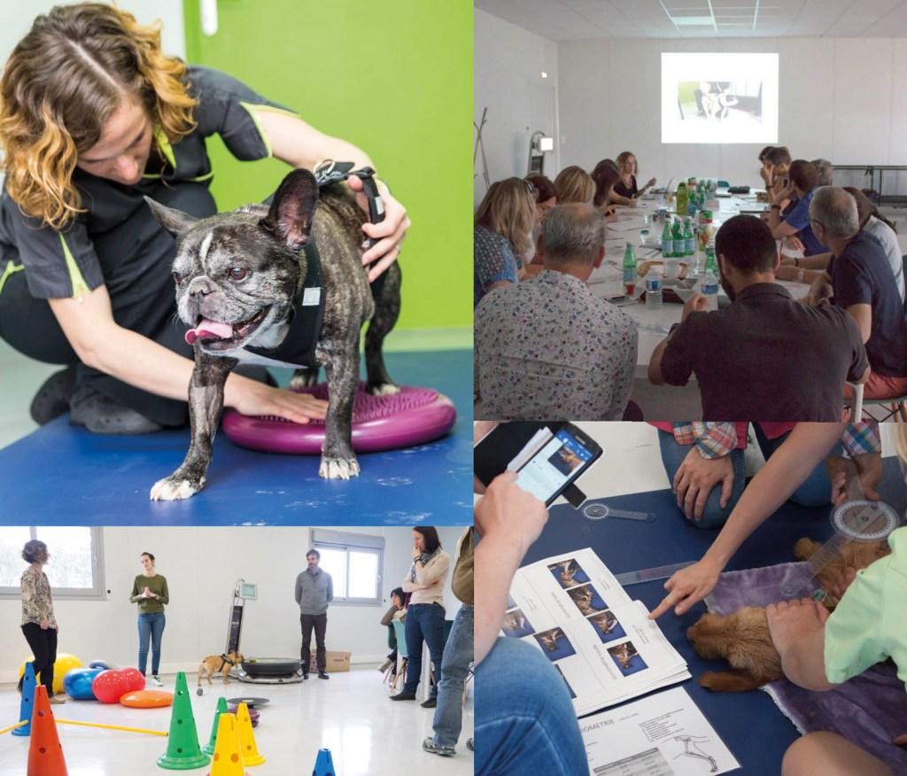Formation-Vétérinaire-2019_Chien-agé