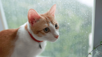 The Weather and Your Cat