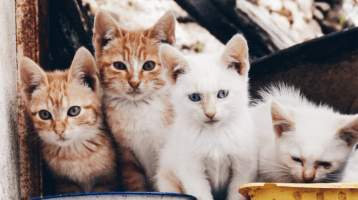 Foods You Should Never Feed Your Cat
