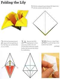 carambola flower origami diagram 2006 ford focus headlight wiring over 75 free paper instructions at allcrafts how to fold an lily