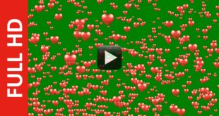 Flying Hearts Green Screen Background Video Effect HD