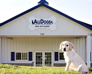 About AllDogs Canine Care Center