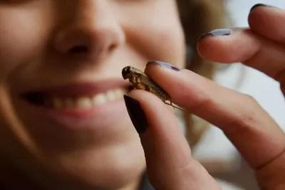 Alimenti: insetti a tavola, primo ok Efsa cibi a base di 'verme giallo'
