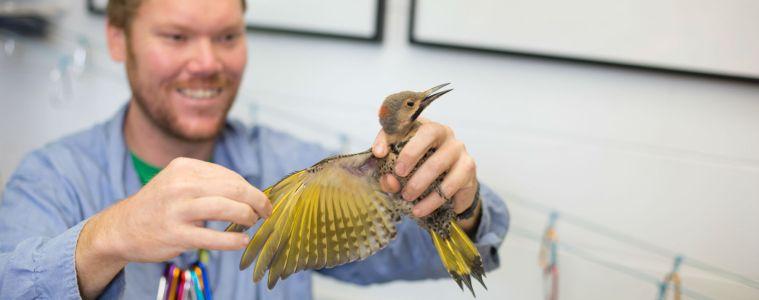 conservation bird research