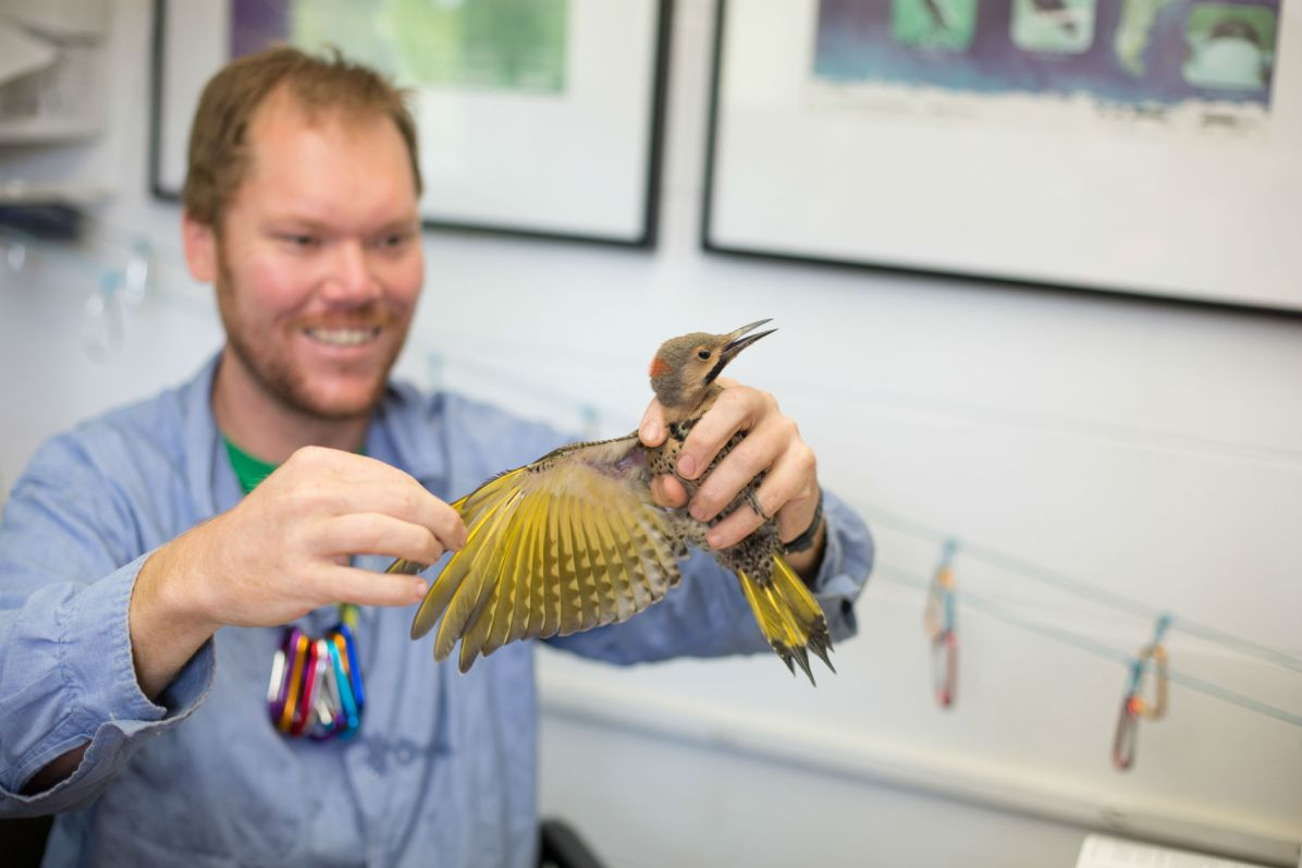 DeGroote with Northern Flicker