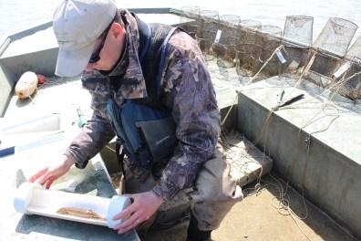 Ryan Miller examines a mudpuppy. Photo: Julie Grant