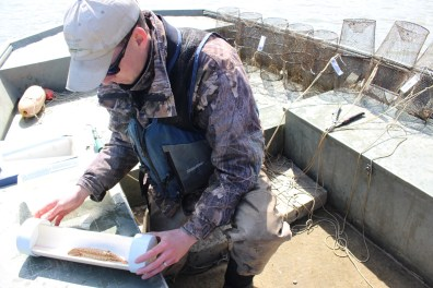 Ryan Miller examines a mudpuppy. Photo: Julie Grant