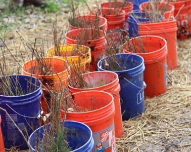 tree seedlings in pots