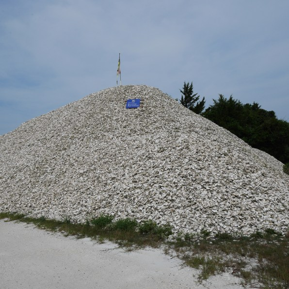 A mountain of cleaned shells. Photo: Kara Holsopple/The Allegheny Front