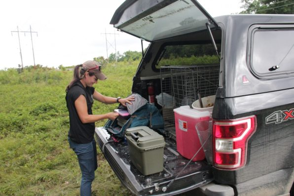 Emily Carrollo prepares for tagging and taking measurements and samples from a captured black bear. Photo: Reid R. Frazier / The Allegheny Front