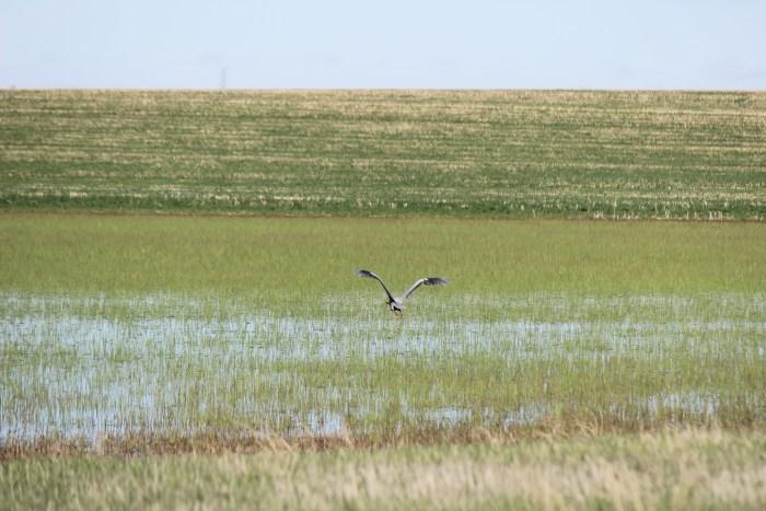 Wetland in Brule County