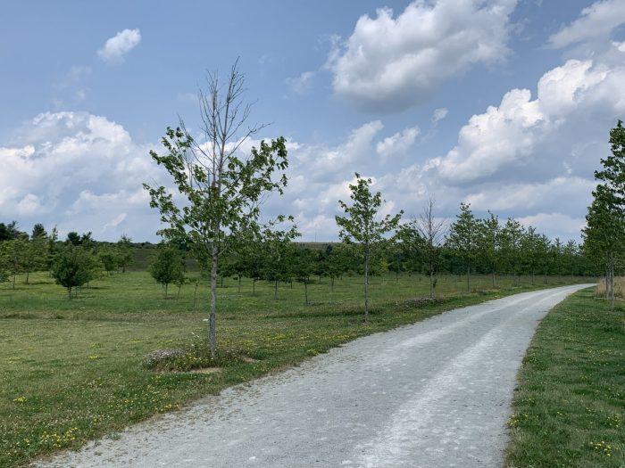 Flight 93 trees