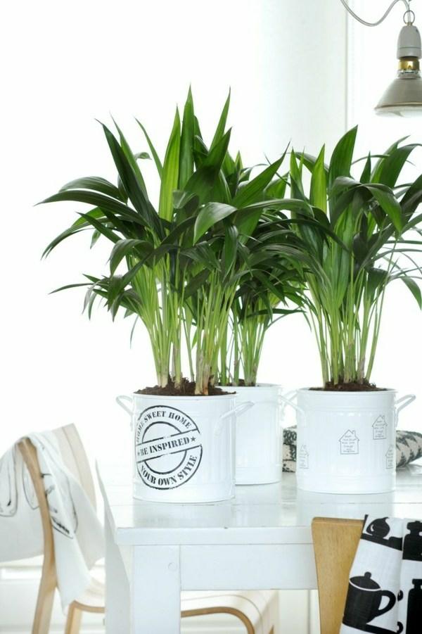 Zimmerpflanzen Von A Bis Z
