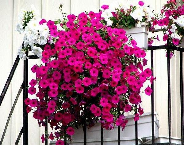 Balkon Ideen Blumenkasten Gelander