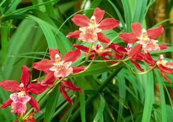 Orchid Iphone Wallpaper Sch 246 Ne Zimmerpflanzen Die Sch 246 Nheit Der Oncidium Orchidee