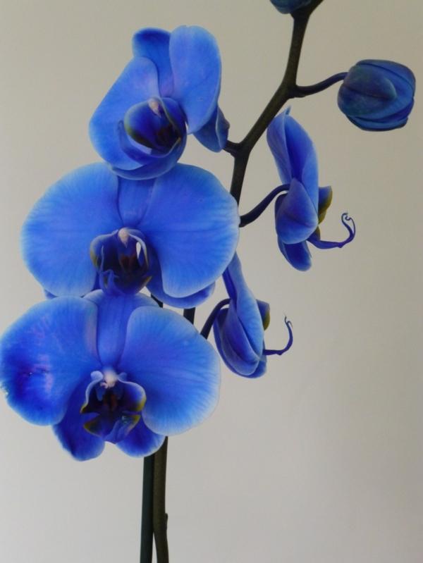 Orchidee Bedeutung verschiedene Arten und deren Schnheit
