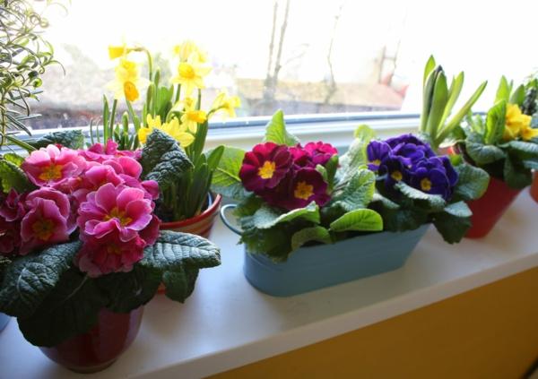 Frhlingsblumen im Haus oder im Garten bringen mehr