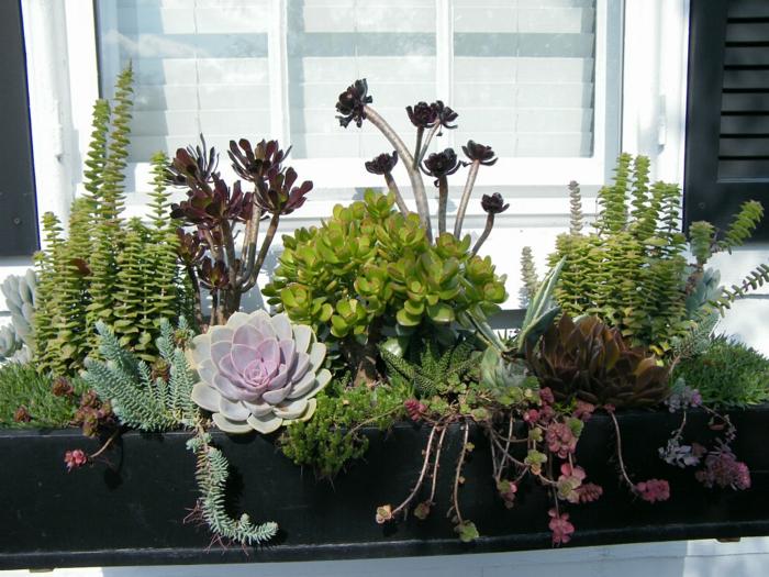 Coole Dekorationsideen mit Sukkulenten fr den Auenbereich