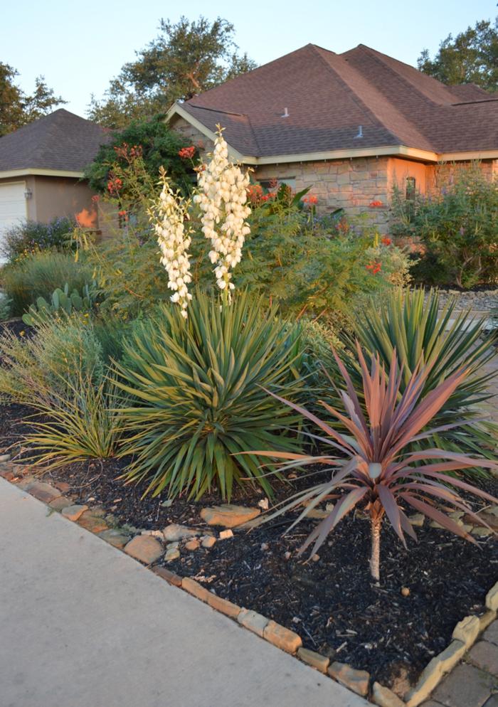 Gartenpflanzen mit magichem Duft welchen man bei Nacht