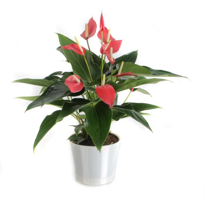 GIftige Pflanzen in Ihrer Umgebung Kennen Sie diese