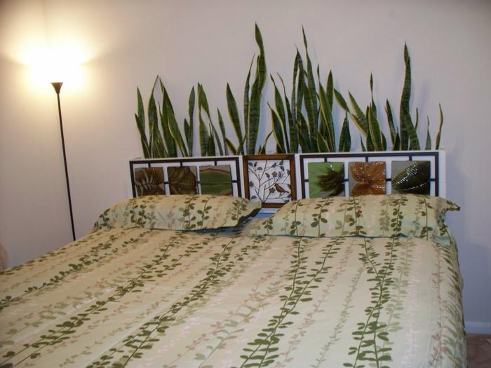Zimmerpflanze fr jedes Zimmer passend auswhlen