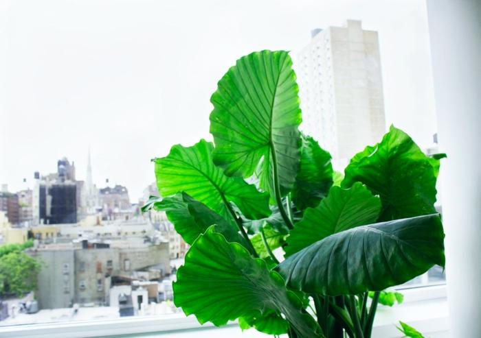 Pflegeleichte Zimmerpflanzen  28 Dekoideen fr die moderne Wohnung