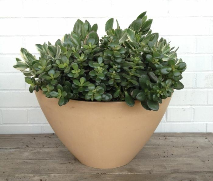 Pflegeleichte Zimmerpflanzen  28 Dekoideen fr die