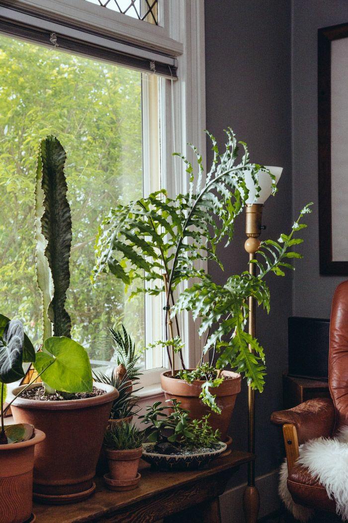 Fensterbank Deko  die Farben der Natur durch Pflanzen