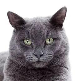 Katzenrassen Für Allergiker Alle Allergiker Geeigneten