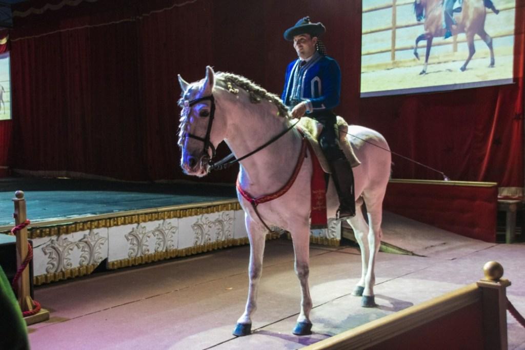 Il cavallo razza spagnola