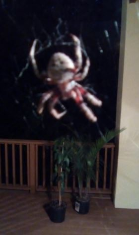 science fiction spider