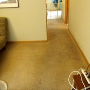 carpet cleaning minnesota